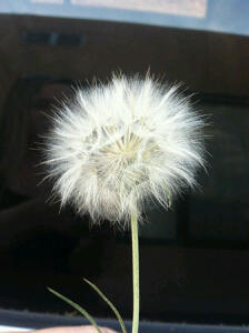 ~•Wishes•~ Photograph by my beautiful sister and best friend Laura Lujan